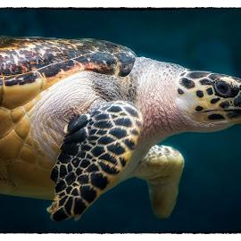 The Glide by Thomas Alexander - Animals Sea Creatures ( nikon d7100, columbus zoo and aquarium, sleepingbear imagewear )