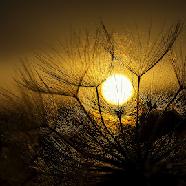 hugging the sun.. by Evangelia Baliou - Nature Up Close Other plants