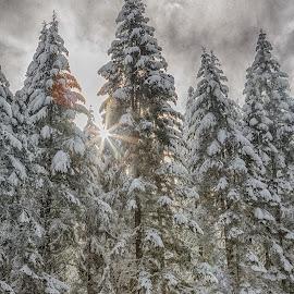 by Debbie Slocum Lockwood - Landscapes Forests