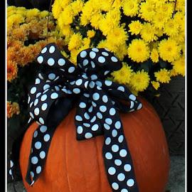 Pumpink by Maritza Féliz - Nature Up Close Gardens & Produce ( fall colors, colorful, pumpkin, bow, vegetable )