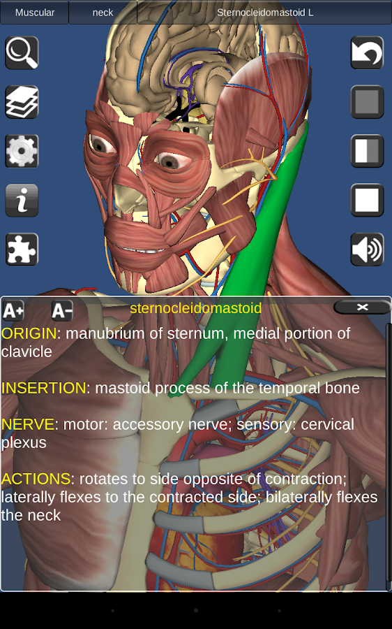 3D Anatomy Screenshot 12