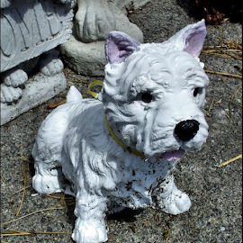 Westie by Nancy Bowen - Novices Only Objects & Still Life ( westie, statue, white, dog )