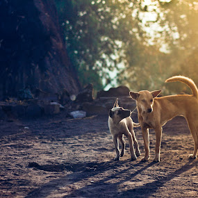 Dog Love by Pande Wiguna - Animals - Dogs Playing ( love, puppies, lovely, fun, dog )