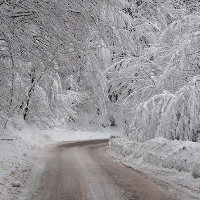 Winter road by Milan Z81 - Landscapes Forests ( winter, snow, white, forest, road )