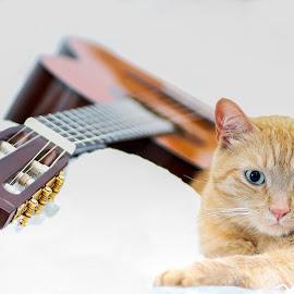 Cat and guitar. by Susan Pretorius - Animals - Cats Portraits