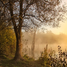 Morning on ponds. by Rado Krasnik - Landscapes Prairies, Meadows & Fields ( water, ponds, fog, trees, morning )