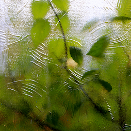 close to nature by Jasmine Baria - Nature Up Close Other Natural Objects ( abstract, best shot,  )