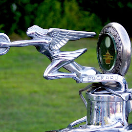 Packard Hood Ornament by Susan Englert - Transportation Automobiles ( winged, woman, wings, silver, ornament, packard, hood )