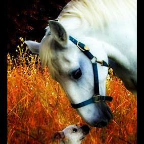 Partners for Life by Carly Stine - Animals Horses