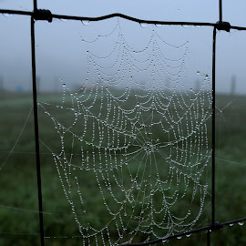 Nature's Splendor by Karen Harrison - Nature Up Close Webs ( moisture, dew, web, morning, spider web, foggy, nature, fog, spider, dewdrops, natural, misty, mist )