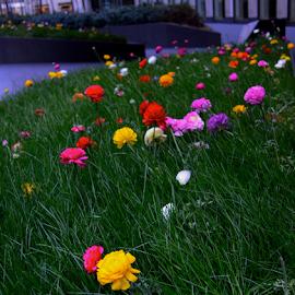 NYC Flower Garden by Rob Kovacs - City,  Street & Park  City Parks