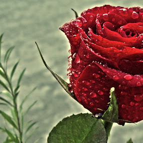 by Prerna Pathre - Nature Up Close Flowers - 2011-2013
