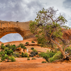 Arch and Tree by Ed & Cindy Esposito - Landscapes Caves & Formations ( monuments, desert, arches national park, buch, green, empty, alone, rocks )