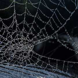 Web drops by Vinny Fotos - Nature Up Close Other Natural Objects