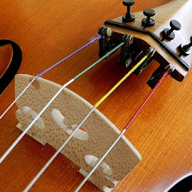 Strings over Bridges by Bethany Davies - Artistic Objects Musical Instruments ( stringed instrument, musical instrument, strings, bridge, viola )