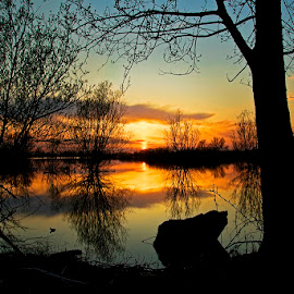 by Siniša Almaši - Nature Up Close Trees & Bushes ( clouds, water, up close, sky, tree, nature, silhouette, sunset, lake, yellow, view, landscape, colours,  )