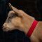 Tiny Goat   24 08 18.jpg