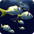 Free Download Fish Schooling VR APK for Samsung