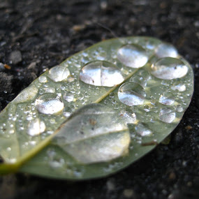 Drops of rain by Nick Massar - Landscapes Weather ( macro, daytime, unique, beautiful, dark, ground, nickolasmassar, leaf, day, light, rain )