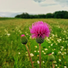 green by Zachary Taylor - Instagram & Mobile Android ( wild flower, mobilografy, green, meadow, flower )