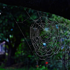 by Драган Рачићевић - Nature Up Close Webs