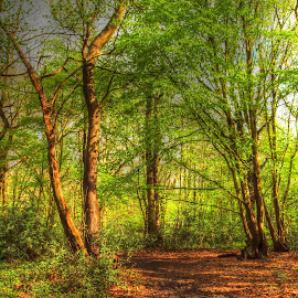 Pound Woods by Martin Hughes - Landscapes Prairies, Meadows & Fields ( benfleet, photomatix, hdr, wood, pound woods, essex, woods )