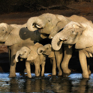elephants at water_3388-pix.jpg
