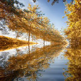 autumn abstract by Egon Zitter - Digital Art Places ( reflection, blue, autumn, fall, trees, yellow, depth )