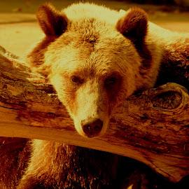 by Steve Tharp - Animals Other Mammals