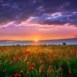 Last light of the day by Luka Balković - Landscapes Prairies, Meadows & Fields ( clouds, may, grass, june, twilight, beautiful, croatia, landscape, spring, field, red, sky, blue, sunset, summer, plains, poppies, flower )
