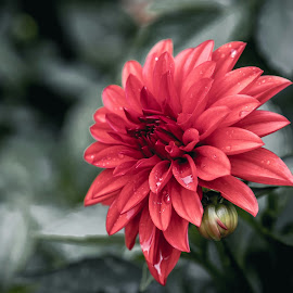 by Jackie Eatinger - Flowers Single Flower (  )