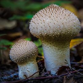 Mushrooms by Sakari Partio - Nature Up Close Mushrooms & Fungi