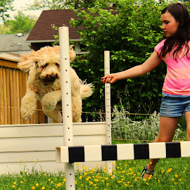 B & B 0.2 by Cecilia Sterling - Animals - Dogs Running ( dogs, obedience, goldendoodle, dog agility, dog )
