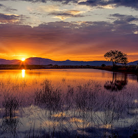 Nuevo Día by Rodolfo Lara - Landscapes Sunsets & Sunrises ( reflejo, agua, árbol, nubes, amanecer )