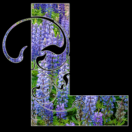 l is for lupins by Lennie L. - Typography Single Letters