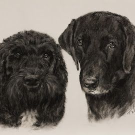 Cockapoo and Labrador by Tricia Winwood - Drawing All Drawing ( two, charcoal, dogs, cute, black )