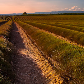 by Stanley P. - Landscapes Prairies, Meadows & Fields