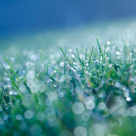 Morning dew by Andrei Crainic - Novices Only Flowers & Plants