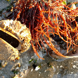 Seastuff by Gene Richardson - Nature Up Close Other Natural Objects