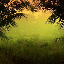 Mystic field  by Monzur Sazid Ahmed - Landscapes Prairies, Meadows & Fields ( morning )