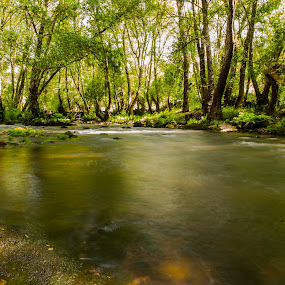 green river by Pedro Ribeiro - Landscapes Forests ( trees, gree, river,  )