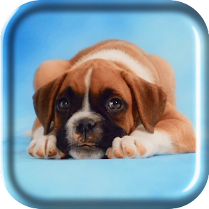 Amazing Puppies Live Wallpaper
