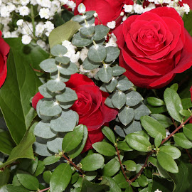 Roses by Anissa Meghji - Nature Up Close Gardens & Produce ( red, green, roses, leaves, flowers )