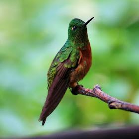 HummingbirdFav.jpg
