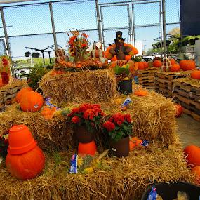 Hay There! by David Jarrard - Public Holidays Halloween ( orange, contes, pumpkins, halloween,  )