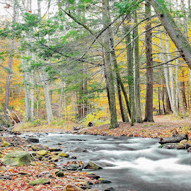 Ricketts Glen State Park by Tony Bendele - Landscapes Travel ( stream, tree, nature, fall colors, creek, outdoors, fall, trees, landscape )