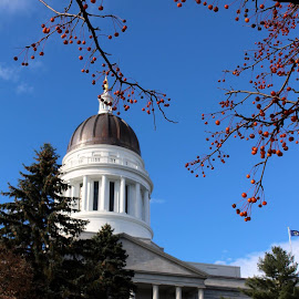 Capitol Berries by Don Cailler - Buildings & Architecture Public & Historical ( building, dome, historical, capitol, berries )