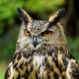 by Sue Lascelles - Animals Birds