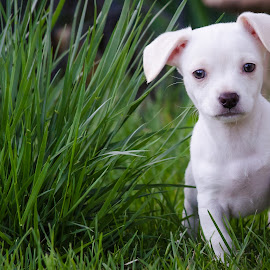 Kelly by Rick W - Animals - Dogs Puppies