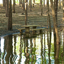 Left over flooded picnic area. by Kathy Suttles - Artistic Objects Still Life